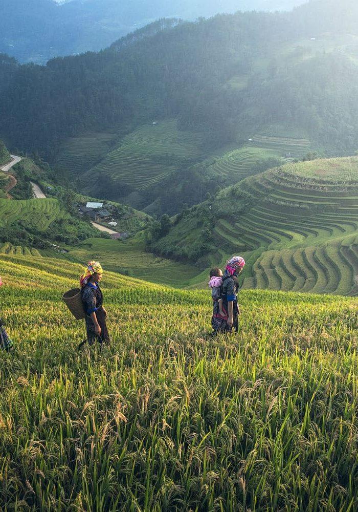 agriculture-thailande